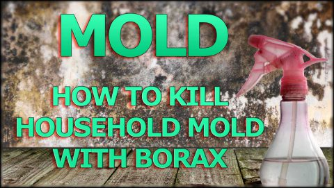 How to kill mold with Borax | Mold Busters LLC